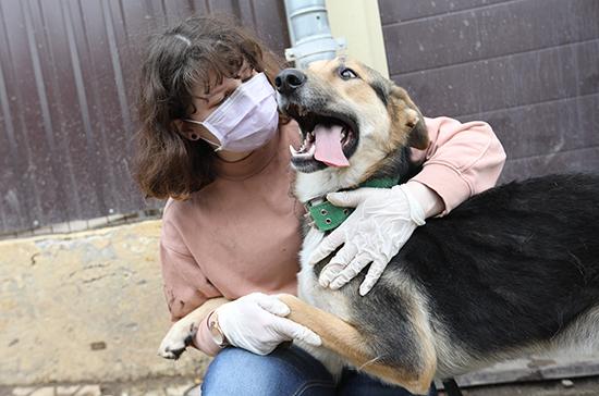 Волонтёры вернулись в приюты для животных по всей стране