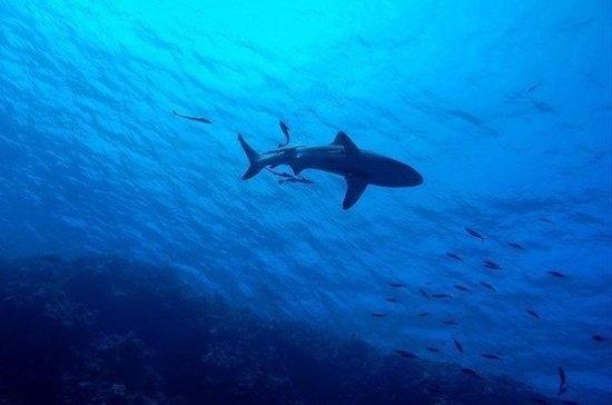 В Испании пловец наткнулся на огромную акулу