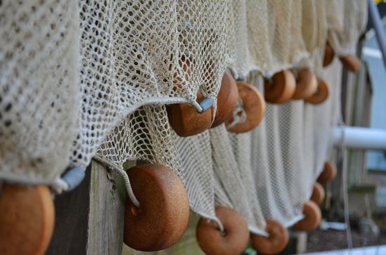 В России уточнили правила определения границ рыбоводных участков