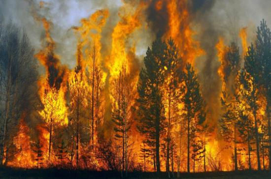 Бурматов предложил дать лесным инспекторам право штрафовать поджигателей