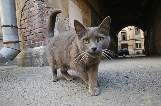 В Минстрое подтвердили право собственников открывать продухи в подвалах для бездомных животных