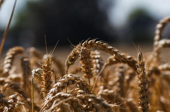 Экономист объяснил лидерство России в экспорте зерна