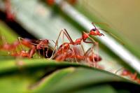 О чём сигнализирует массовая гибель насекомых?