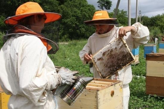 В Приморье совершенствуют региональный закон о пчеловодстве