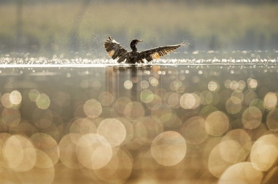 Петербуржцев попросили не кормить птиц ради их же блага