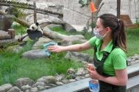 В Подмосковье музеи, МФЦ и зоопарки откроются для посетителей