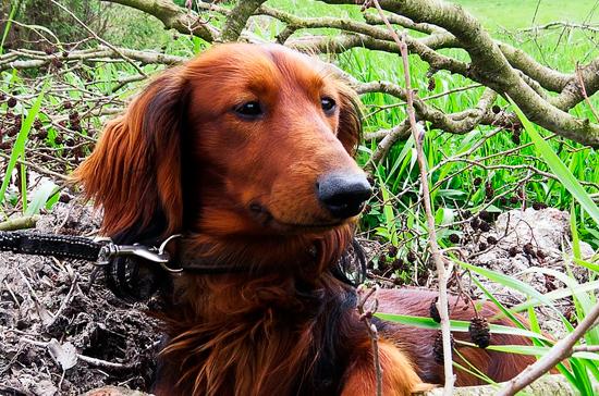 Минприроды разработало порядок использования ограждений при притравке собак