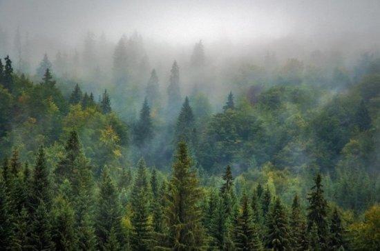 Защитные лесополосы будут высаживать за счёт бюджета