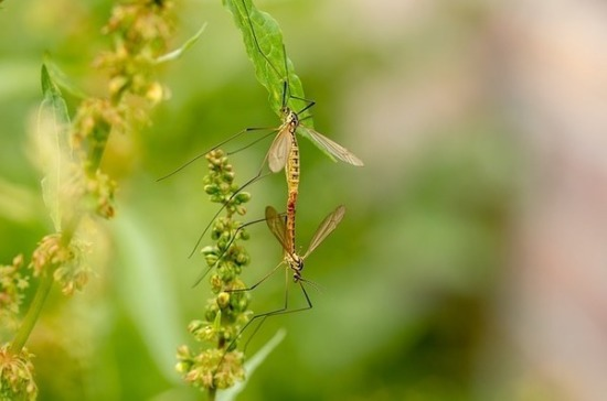 Учёный рассказал об опасности малярийных комаров в России