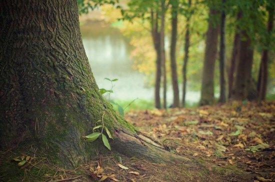 В России появятся защитные лесные насаждения