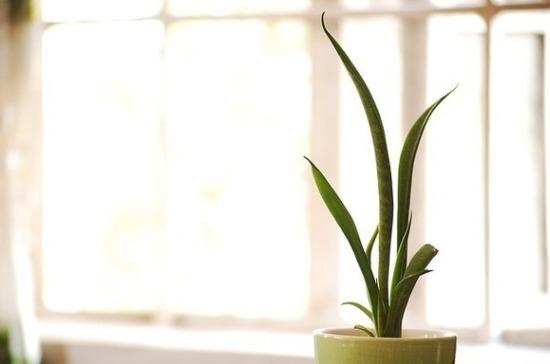 Флорист рассказала о самом неприхотливом комнатном растении