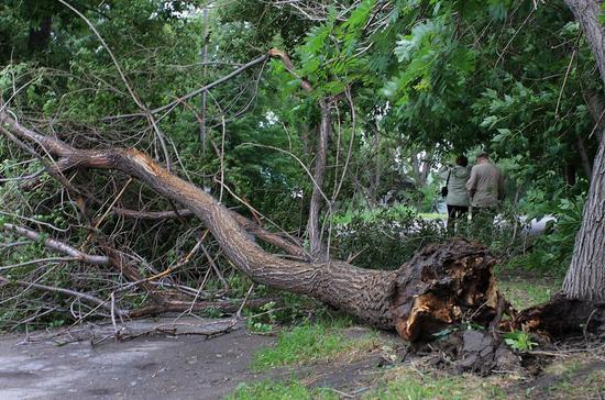 В Москве из-за непогоды повалило более 10 деревьев, подтоплены дороги и улицы