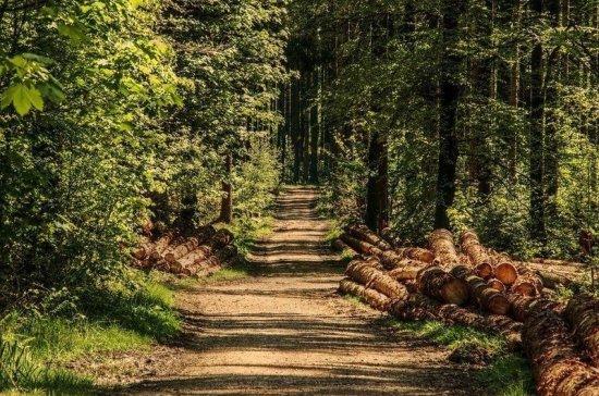 В Санкт-Петербурге продлили запрет на посещение лесов и парков