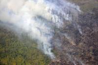 В Госдуму внесён законопроект о вырубке лесов для предупреждения ЧС