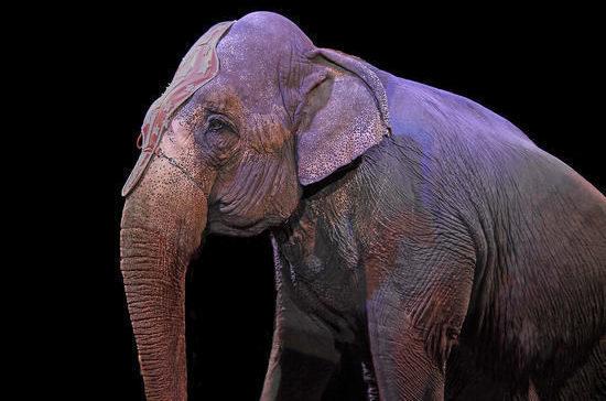 Цирки и зоопарки предлагают штрафовать за жестокое обращение с животными