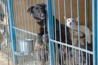 Путин поручил подготовить предложения по развитию на территории России сети приютов для животных