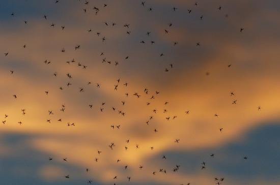 В Роспотребнадзоре рассказали, какие насекомые опаснее комаров