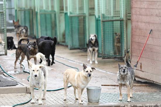В Подмосковье введут штрафы за нарушение норм содержания животных в приютах