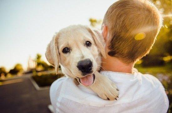Эксперт рассказал, каким породам собак нельзя летать на самолете