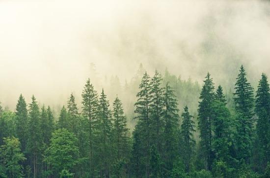 В Москве создадут 18 новых охраняемых природных территорий