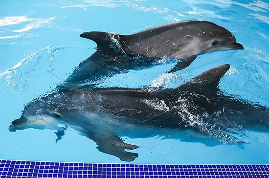 В Госдуме хотят запретить вылов морских млекопитающих для культурно-зрелищных мероприятий