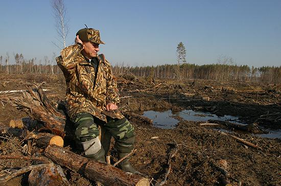 В Госдуму внесут законопроект о реформе лесной отрасли