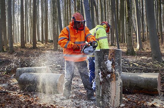 Норматив патрулирования лесов инспекторами могут изменить