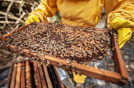 Создание «зон активного пчеловодства» послужит развитию этой отрасли, заявил Белоусов