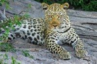 Сафари-парк со львами открылся в Приморском крае