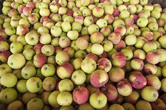 В России резко подорожали яблоки, пишут СМИ
