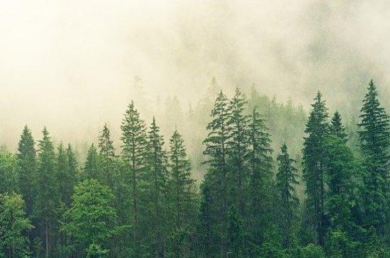 Учёные: нескончаемая вырубка деревьев может привести к гибели человечества