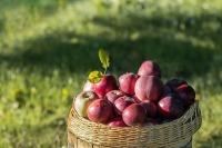Челябинские студенты помогают аграриям убирать урожай