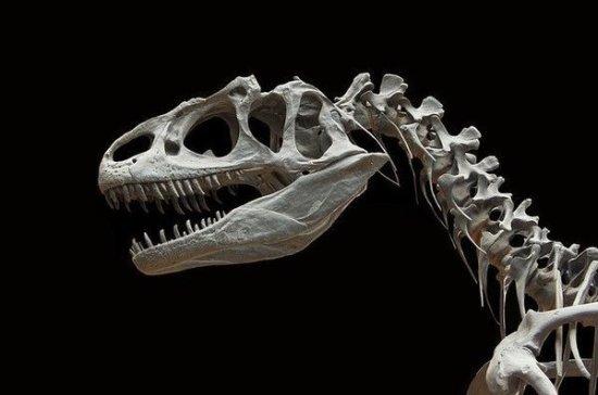 Палеонтологи объяснили гигантские размеры динозавров