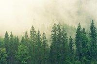 По итогам прокурорских проверок в сфере охраны лесов возбудили почти 700 уголовных дел
