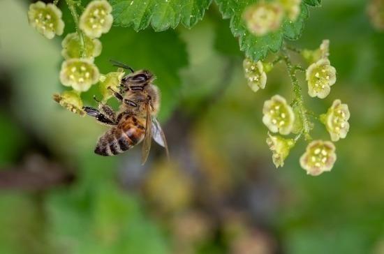 Белоусов: в России могут появиться «зоны активного пчеловодства»