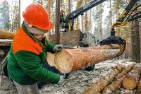 Чёрных лесорубов остановит реформа лесной отрасли