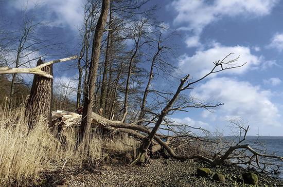 Штормовой ветер повалил деревья в центре Санкт-Петербурга