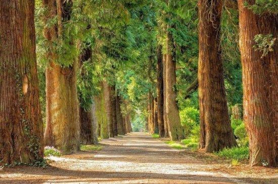 Учёные рассказали об опасности быстрорастущих деревьев для климата