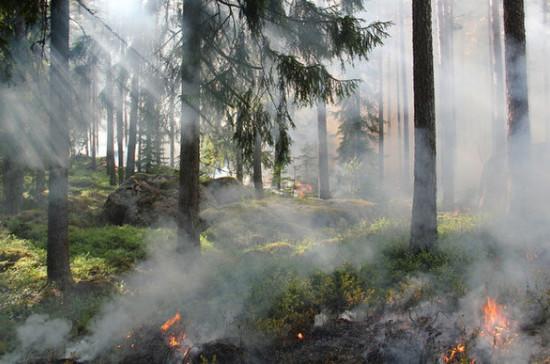 Площадь лесных пожаров в России сократилась на 30% в 2020 году