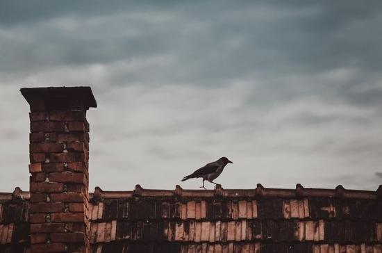 Минприроды объяснило выделение средств на борьбу с воронами на крыше правительства