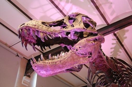 Скелет тираннозавра продадут на аукционе в США