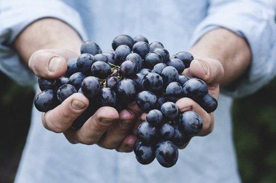 Агроном рассказал, какую опасность может нести виноград