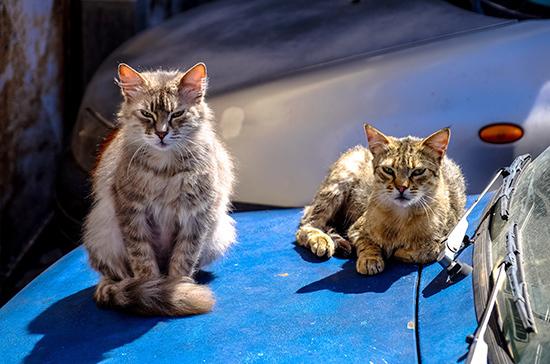 Кошек хотят пустить в подвалы по всей стране