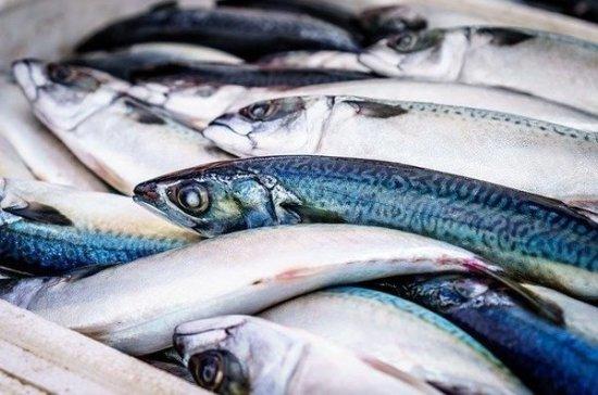 Специалист назвал самую полезную для здоровья рыбу