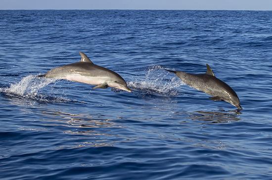 В Австралии почти 400 дельфинов выбросились на берег