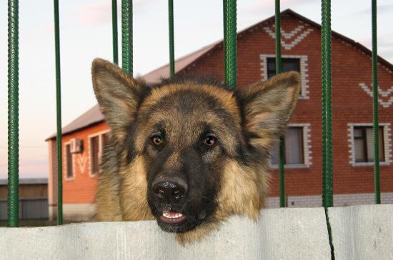 В Госдуму внесен проект о запрете изымать домашних животных за долги