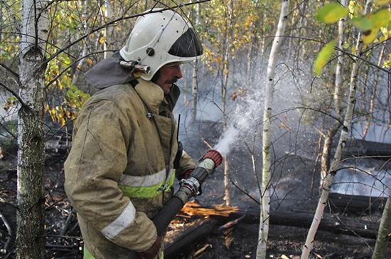 В Воронежскую область для тушения лесных пожаров направили спасателей