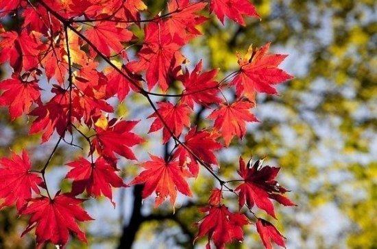 Глава Росгидромета рассказал, какая погода будет в последние месяцы осени и начале зимы