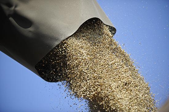 Россия собрала второй по объему урожай пшеницы в истории