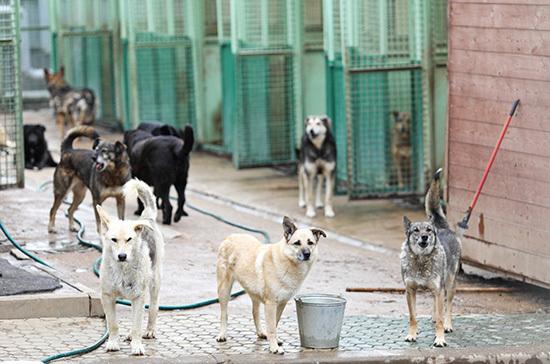 Активистам разрешат проверять приюты для животных